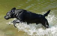 Nico w wodzie